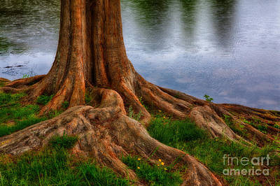 Deep Roots - Tree On North Carolina Lake Art Print by Dan Carmichael