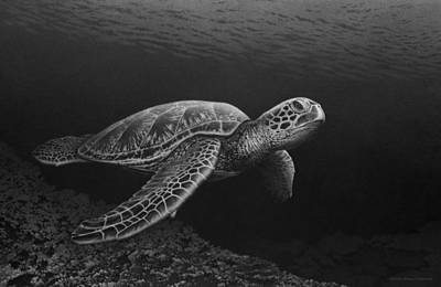Green Sea Turtle Drawing - Deep Sea Drifter by Doug Comeau