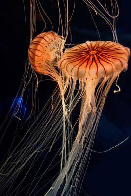 Fluorescence Digital Art - Deep Sea Jelly Fish by Daniel Hagerman