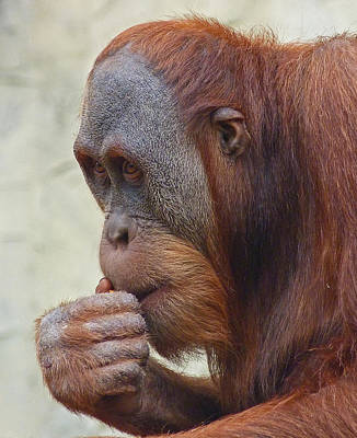 Photograph - Deep Thinker Junior by Margaret Saheed