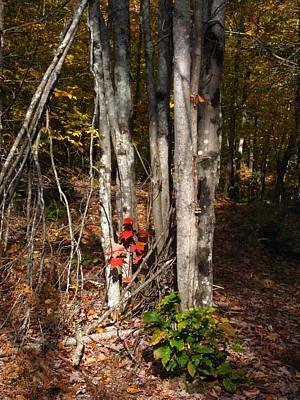 Photograph - Deep Woods by Bill Tomsa