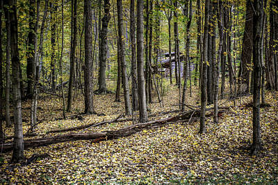 Log Cabins Photograph - Deep Woods Cabin by Tom Mc Nemar