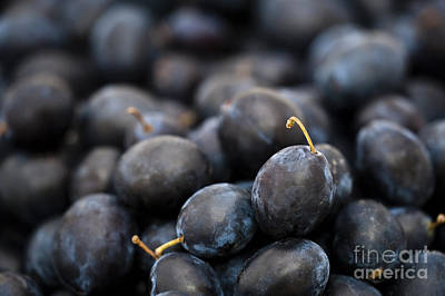 Deeply Damson Art Print by Anne Gilbert