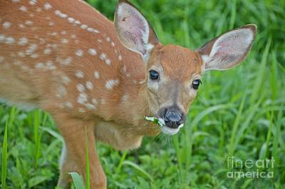 Photograph - Deer 22 by Cassie Marie Photography