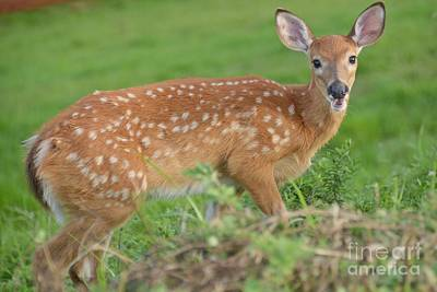 Photograph - Deer 24 by Cassie Marie Photography
