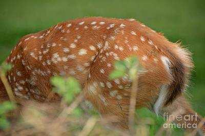 Photograph - Deer 27 by Cassie Marie Photography