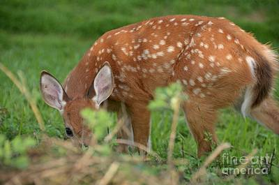 Photograph - Deer 28 by Cassie Marie Photography