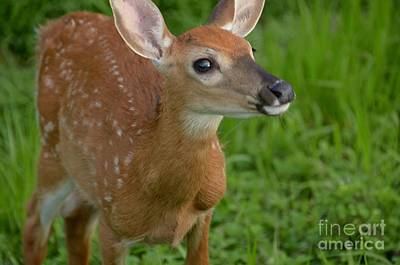 Photograph - Deer 36 by Cassie Marie Photography
