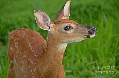 Photograph - Deer 37 by Cassie Marie Photography
