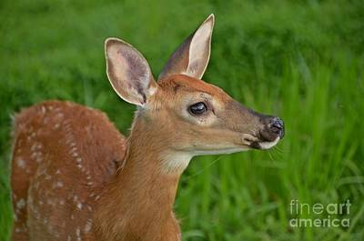 Photograph - Deer 38 by Cassie Marie Photography