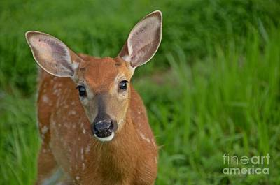 Photograph - Deer 39 by Cassie Marie Photography