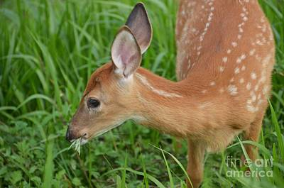 Photograph - Deer 41 by Cassie Marie Photography