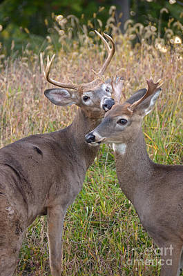Deer 49 Art Print