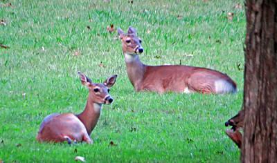Photograph - Deer by Aaron Martens