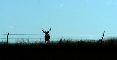 Art Print featuring the photograph Ohhhh Deer by Shirley Heier