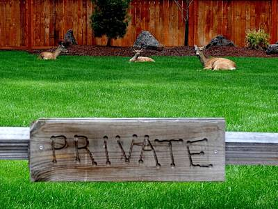 Deer At Rest Art Print