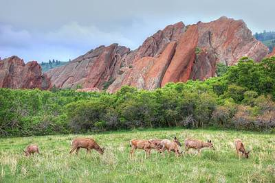 Photograph - Deer At Roxbourough by Ken Smith