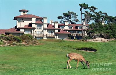 Deer At Spanish Bay Art Print
