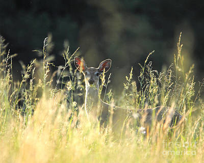 Photograph - Deer At Sunset by Jai Johnson