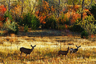 Deer Autumn Art Print by Bill Kesler