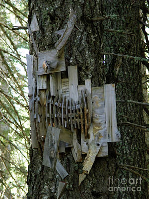 Photograph - Deer Blind 01 by Peter Piatt