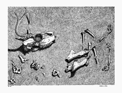 Drawing - Deer Bones by Daniel Reed