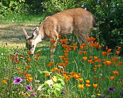 Photograph - Deer Buffet  by Gracia  Molloy