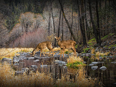Photograph - Deer Crossing by Randall Nyhof