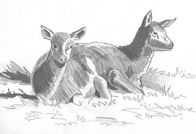 Drawing - Deer Drawing by Mike Jory