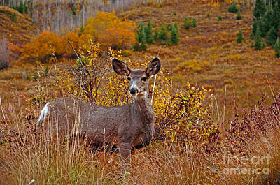 Photograph - Deer Fall Beginnings by Kelly Black
