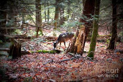 Photograph - Deer Grazing by Cynthia Mask