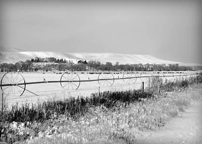 Mule Deer Herd Photograph - Deer Herd In Winter by Lisa Holland-Gillem