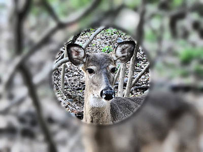 Deer Hunter's View Art Print