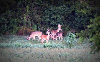 On Trend At The Pool - Deer-IMG-0158-004 by Travis Truelove