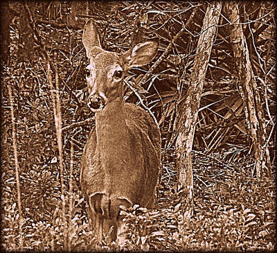 Photograph - Deer In Brown 1 by Sheri McLeroy
