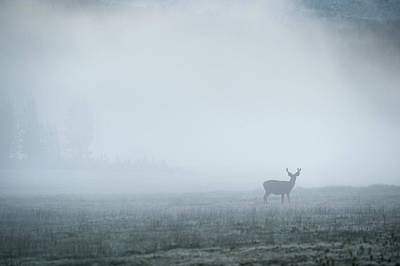 Colorado Wildlife Wall Art - Photograph - Deer In Fog At Dawn In Tuolumne by Cody Duncan