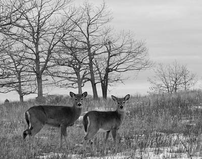 Brian Rock Wall Art - Photograph - Deer In Meadow by Brian Rock