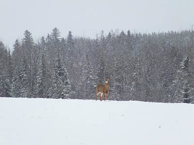 Photograph - Deer In Storm 2 by Gene Cyr