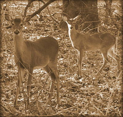 Photograph - Deer In Sunlight Sepia 1 by Sheri McLeroy