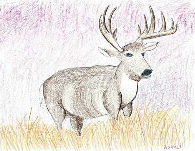 Drawing - Deer In The Grass At Dusk by Fred Hanna