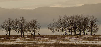 Brian Rock Wall Art - Photograph - Deer In The Meadows by Brian Rock