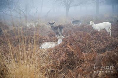 Deer In The Mist Print by Donald Davis