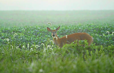 Photograph - Deer In The Mist by Shari Jardina
