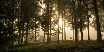Morning Light Wall Art - Photograph - Deer In The Morning Mist. by Leif L??ndal