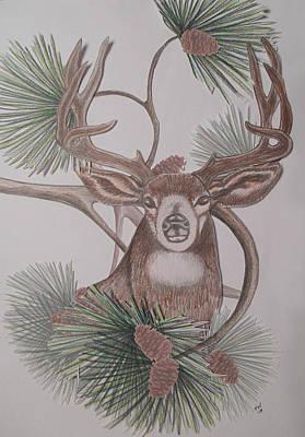 Deer In The Northwest Art Print by Teresa Wenger