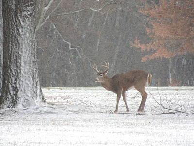 Photograph - Deer In Winter 4 by Todd Sherlock