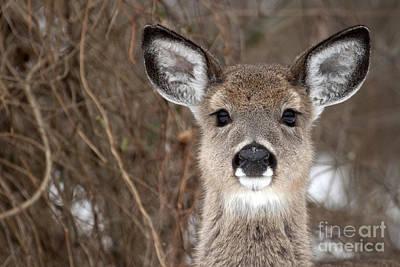 Deer Art Print by Jeannette Hunt