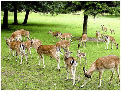 Landscape Digital Art - Deer Meeting by Barbara Zahno