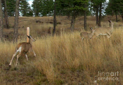 Photograph - Deer On The Run by Gail Matthews
