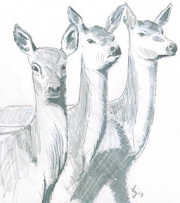 Deer Drawing - Deer Sketch by Mike Jory